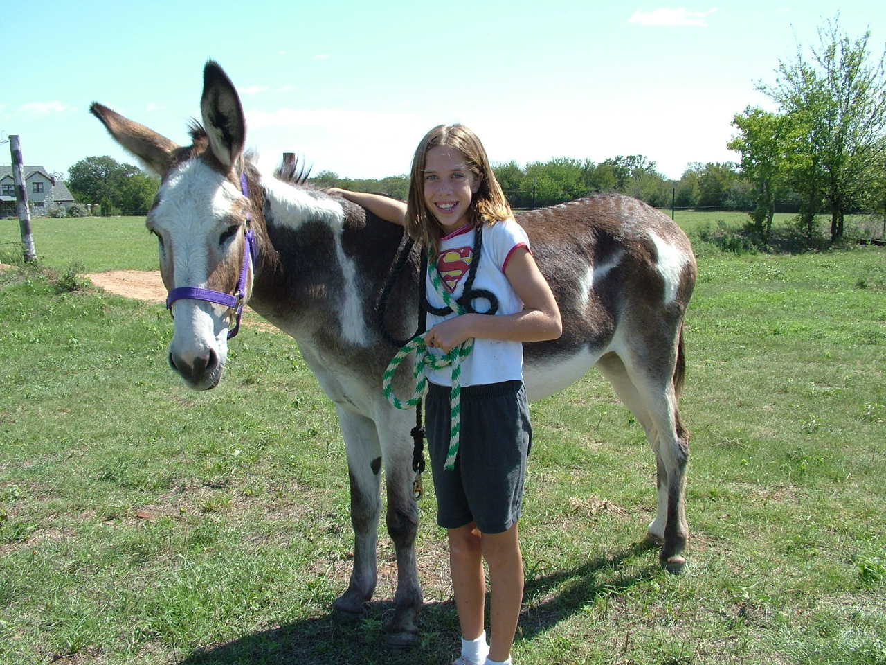 Go Green - Ride a Donkey!